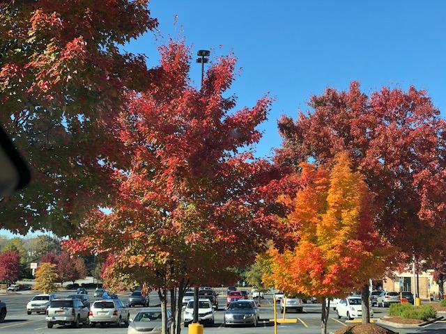 Blue Ridge Parkway Fall 2018 | Clearwater Creek Property ...